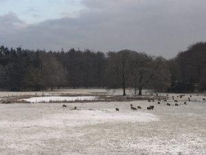 Uitzicht Casella winter 2015